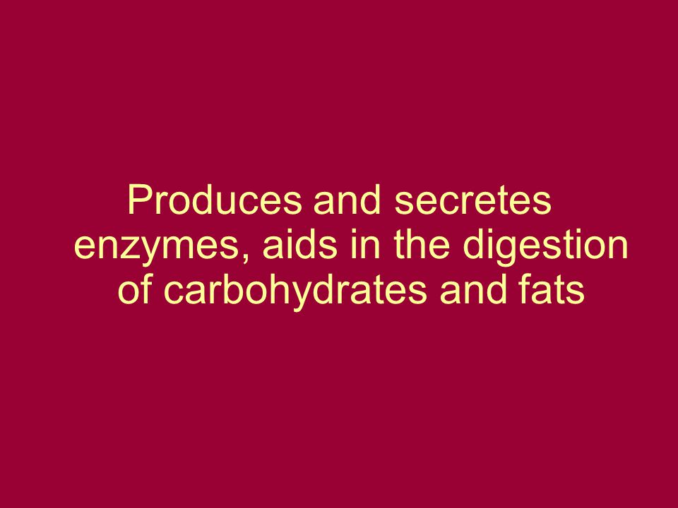 Produces and secretes enzymes, aids in the digestion of carbohydrates and fats