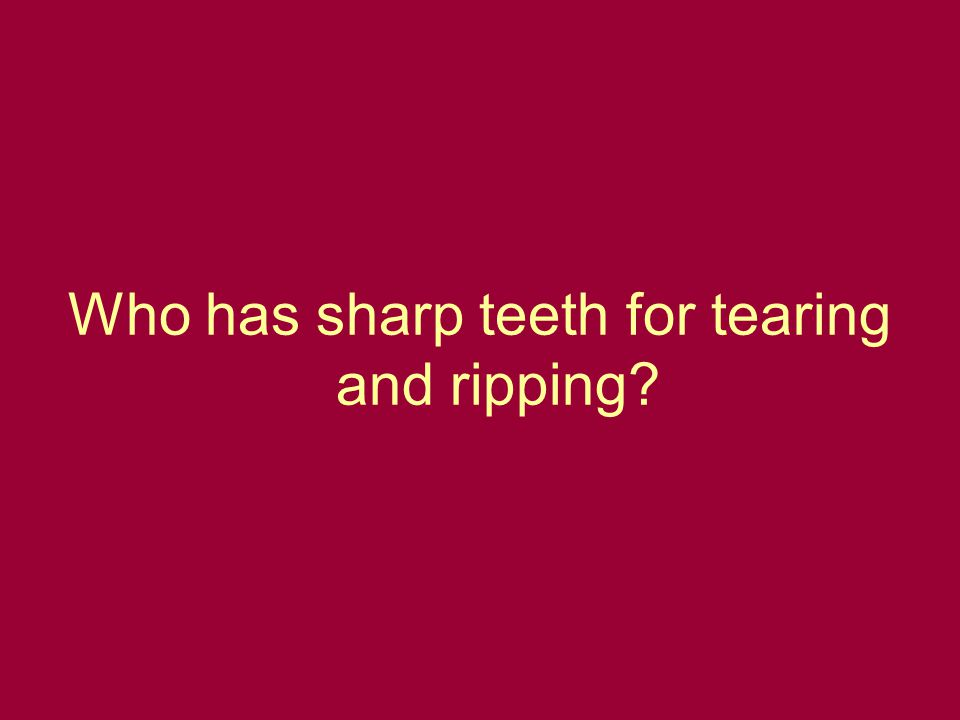 Who has sharp teeth for tearing and ripping?