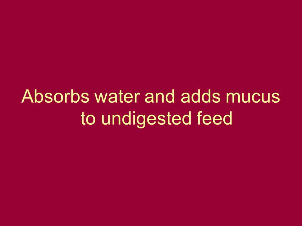 Absorbs water and adds mucus to undigested feed