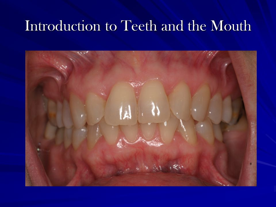 Introduction to Teeth and the Mouth