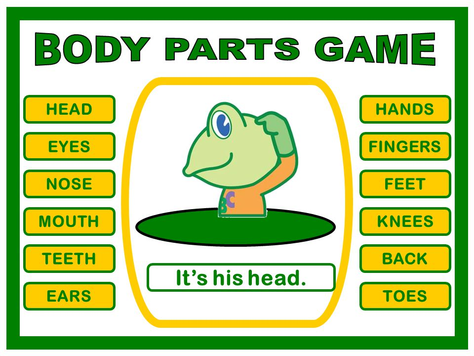 HEAD EYES NOSE MOUTH TEETH EARS HANDS FINGERS FEET KNEES BACK TOES It's his head.