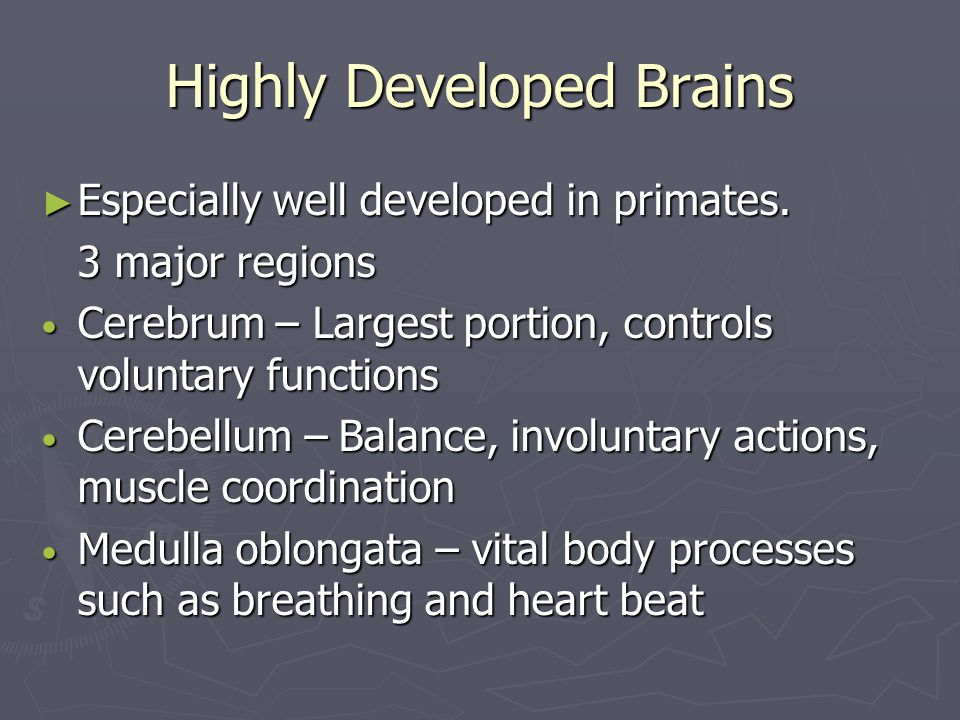 Highly Developed Brains ► Especially well developed in primates. 3 major regions Cerebrum – Largest portion, controls voluntary functions Cerebrum – L