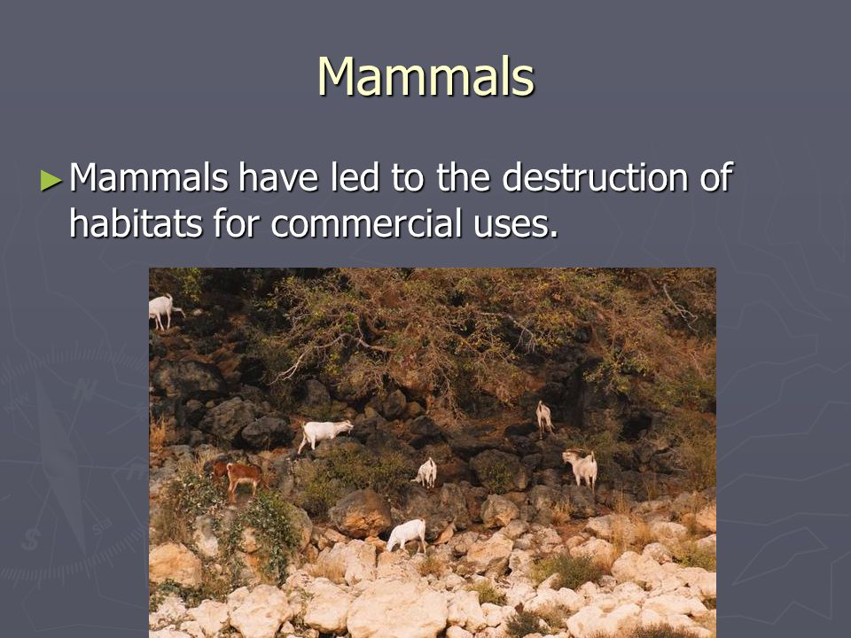 Mammals ► Mammals have led to the destruction of habitats for commercial uses.