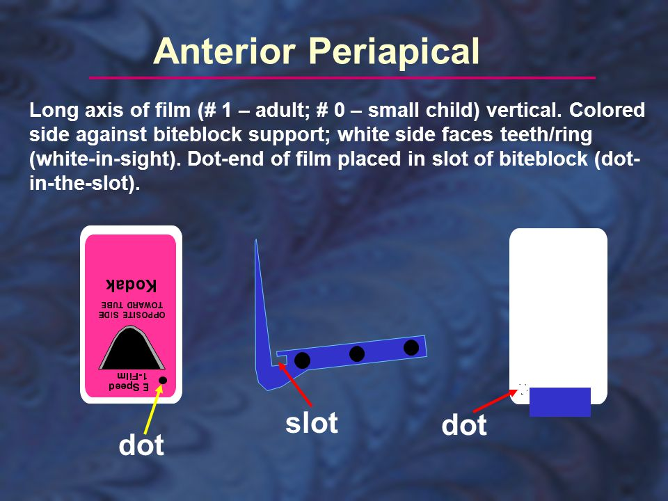 Posterior Periapical Long axis of film (# 2 – adult, # 0 – small child) horizontal.