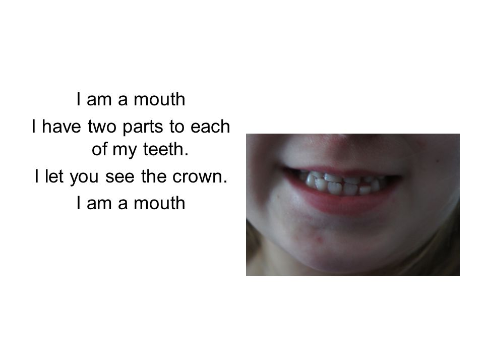 I have two parts to each of my teeth. I let you see the crown. I am a mouth