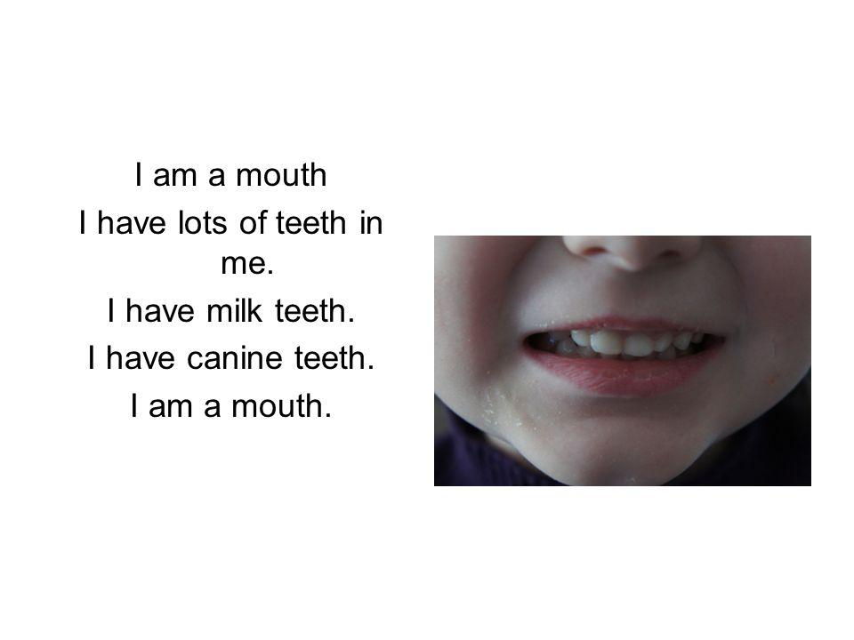 I am a mouth I have lots of teeth in me. I have milk teeth. I have canine teeth. I am a mouth.