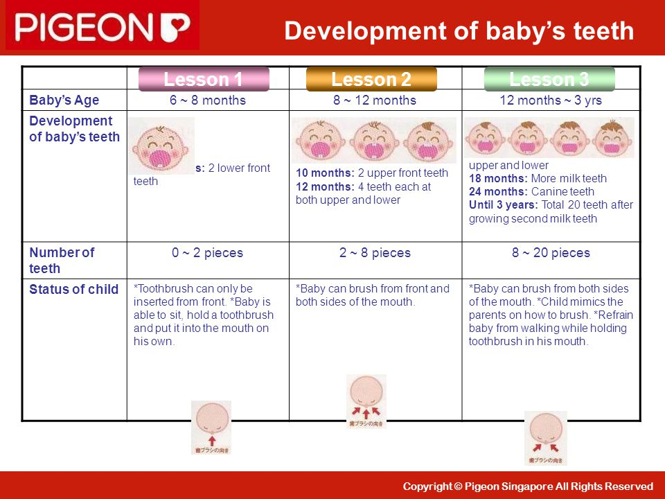 Copyright © Pigeon Singapore All Rights Reserved Baby's Age6 ~ 8 months8 ~ 12 months12 months ~ 3 yrs Development of baby's teeth 6 ~ 8 months: 2 lowe