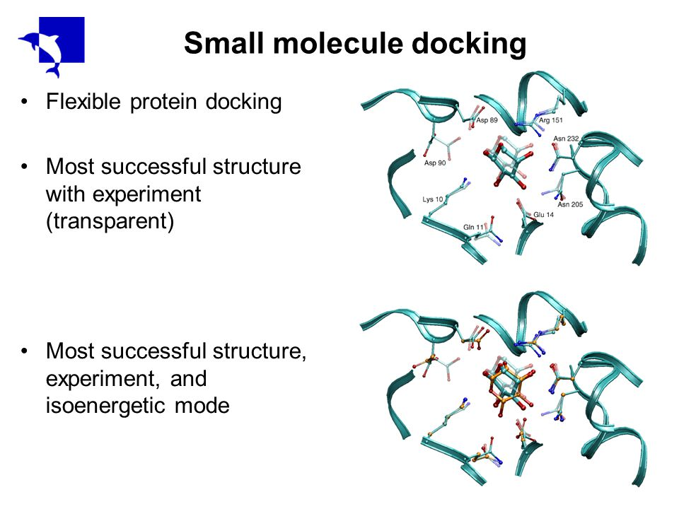 Small molecule docking Flexible protein docking Most successful structure with experiment (transparent) Most successful structure, experiment, and isoenergetic mode