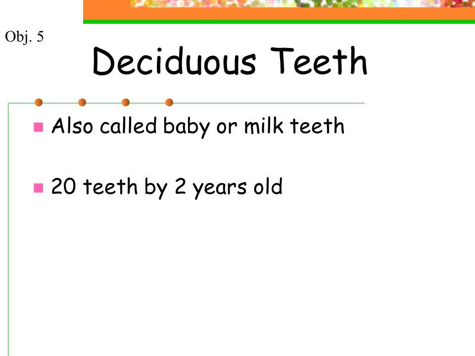 Deciduous Teeth Also called baby or milk teeth 20 teeth by 2 years old Obj. 5