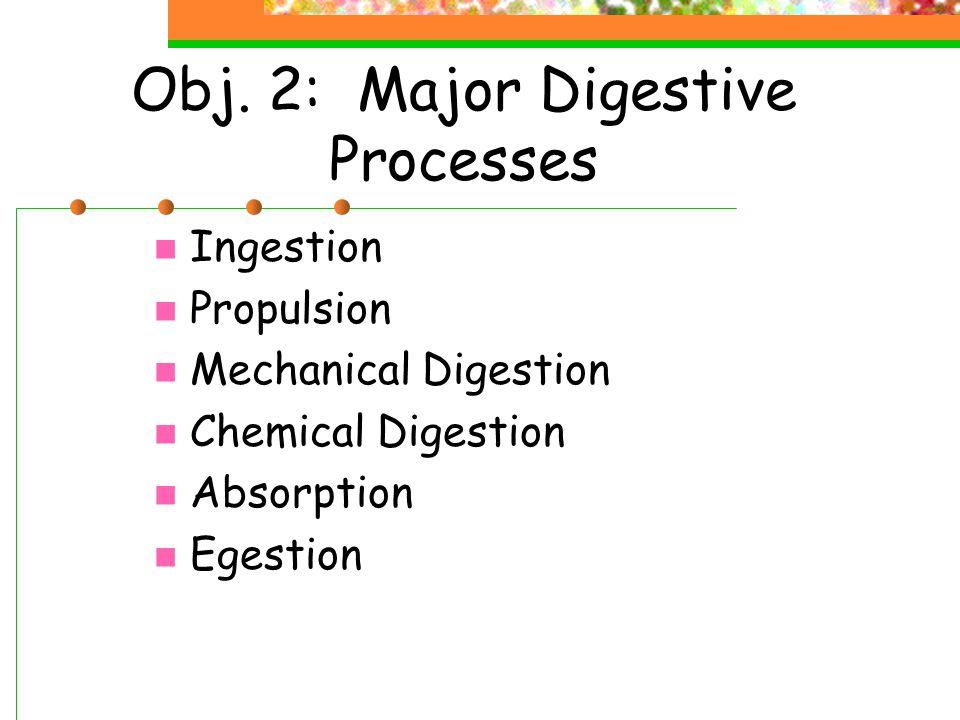 Obj. 2: Major Digestive Processes Ingestion Propulsion Mechanical Digestion Chemical Digestion Absorption Egestion