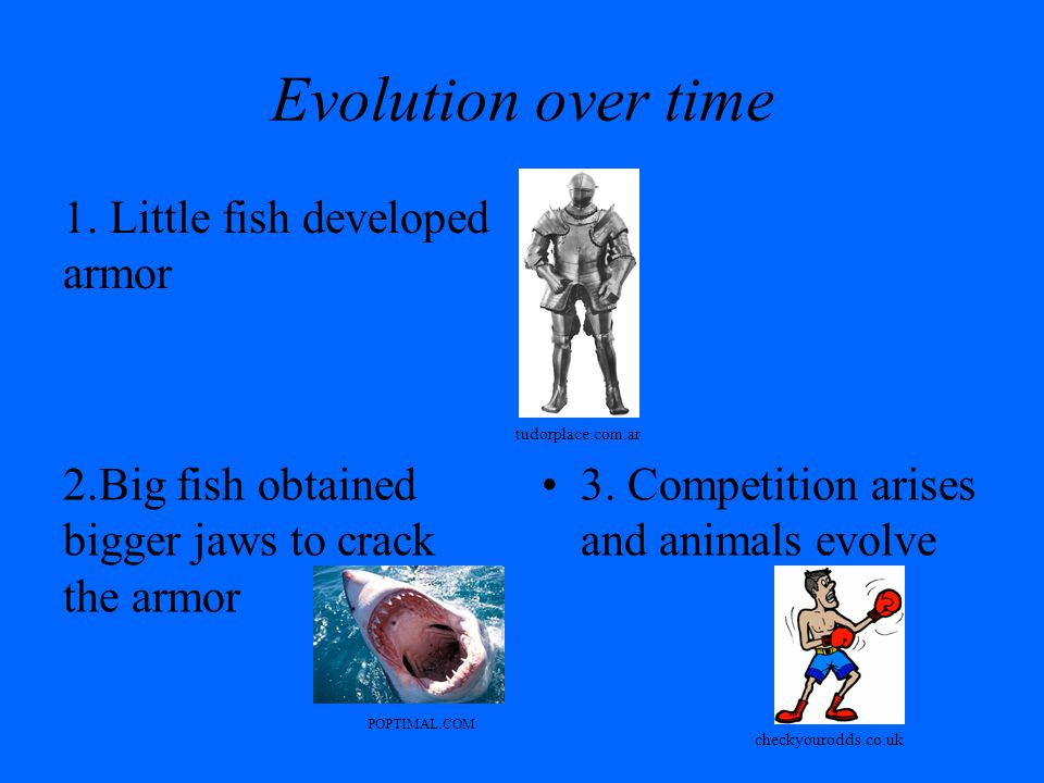 Evolution over time 1. Little fish developed armor 2.Big fish obtained bigger jaws to crack the armor 3. Competition arises and animals evolve tudorpl