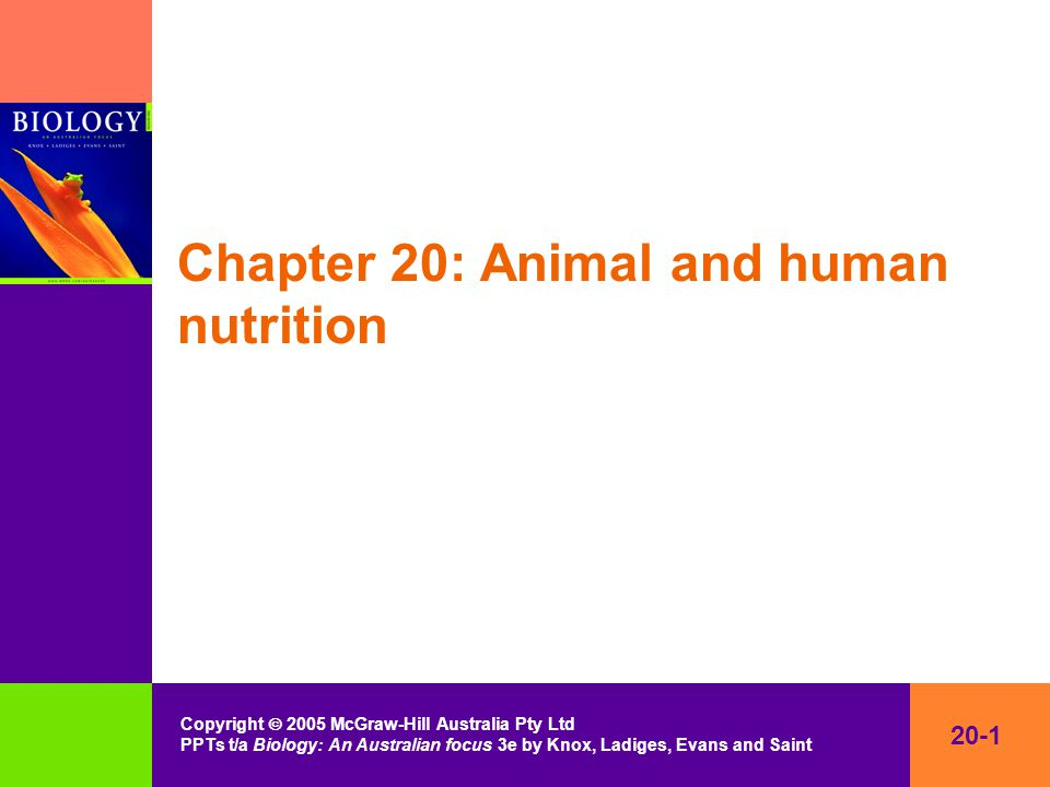 20-1 Copyright  2005 McGraw-Hill Australia Pty Ltd PPTs t/a Biology: An Australian focus 3e by Knox, Ladiges, Evans and Saint Chapter 20: Animal and human nutrition