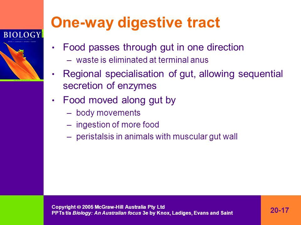20-17 Copyright  2005 McGraw-Hill Australia Pty Ltd PPTs t/a Biology: An Australian focus 3e by Knox, Ladiges, Evans and Saint One-way digestive tract Food passes through gut in one direction –waste is eliminated at terminal anus Regional specialisation of gut, allowing sequential secretion of enzymes Food moved along gut by –body movements –ingestion of more food –peristalsis in animals with muscular gut wall
