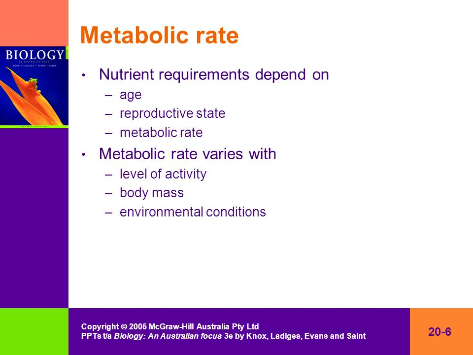 20-6 Copyright  2005 McGraw-Hill Australia Pty Ltd PPTs t/a Biology: An Australian focus 3e by Knox, Ladiges, Evans and Saint Metabolic rate Nutrient requirements depend on –age –reproductive state –metabolic rate Metabolic rate varies with –level of activity –body mass –environmental conditions