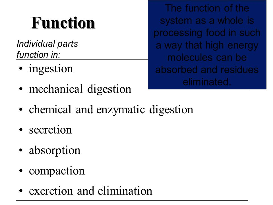 Function ingestion mechanical digestion chemical and enzymatic digestion secretion absorption compaction excretion and elimination The function of the