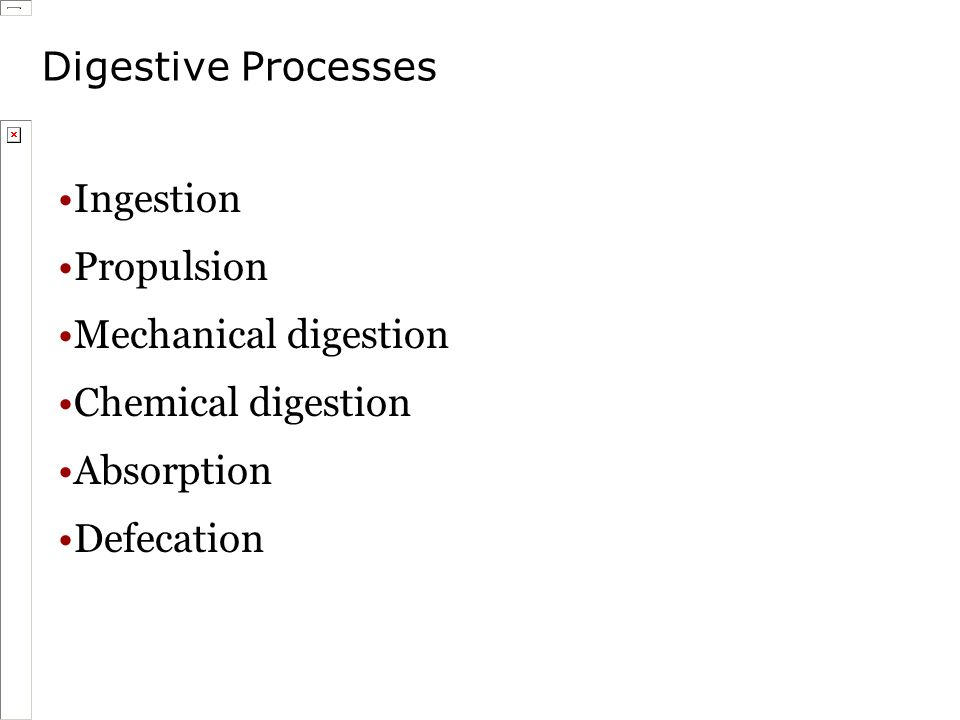 Digestive Processes Ingestion Propulsion Mechanical digestion Chemical digestion Absorption Defecation