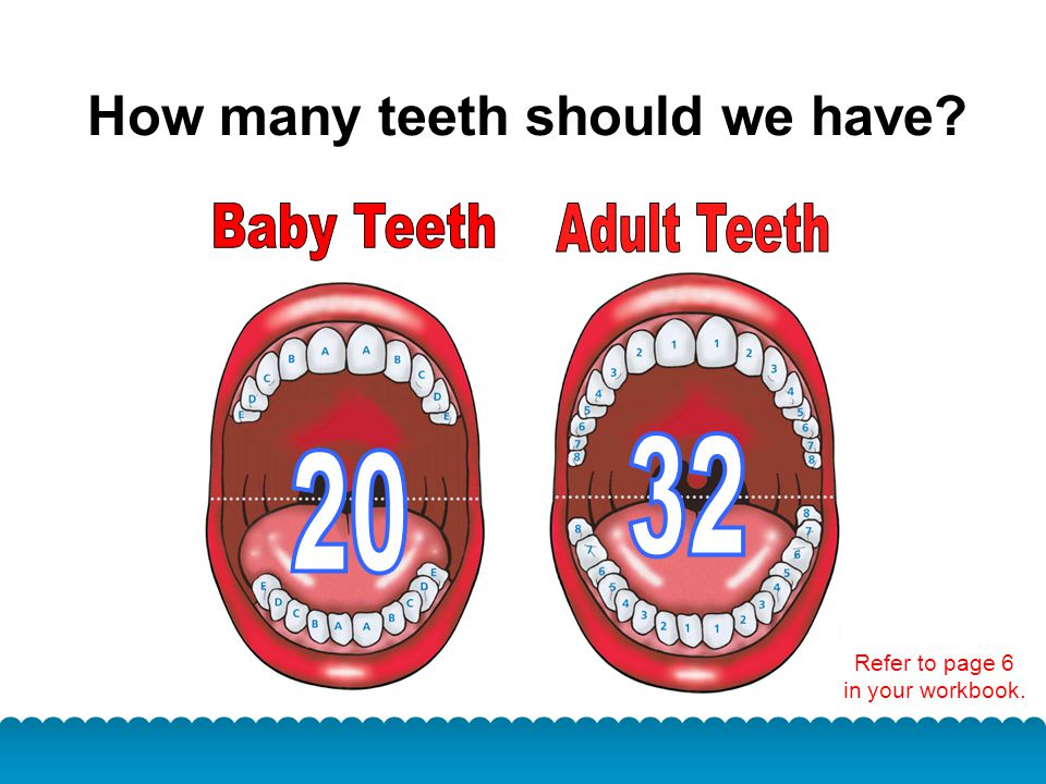 How many teeth should we have? Refer to page 6 in your workbook.