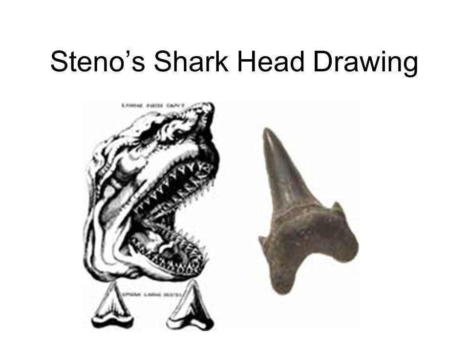 Steno's Shark Head Drawing