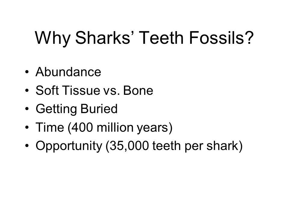 Why Sharks' Teeth Fossils. Abundance Soft Tissue vs.
