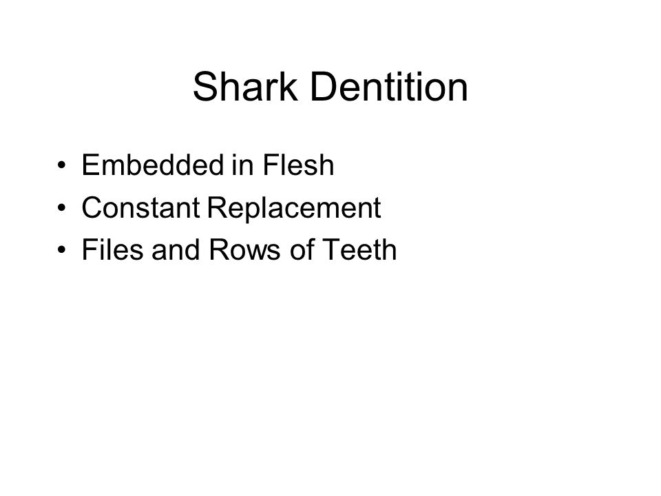Shark Dentition Embedded in Flesh Constant Replacement Files and Rows of Teeth