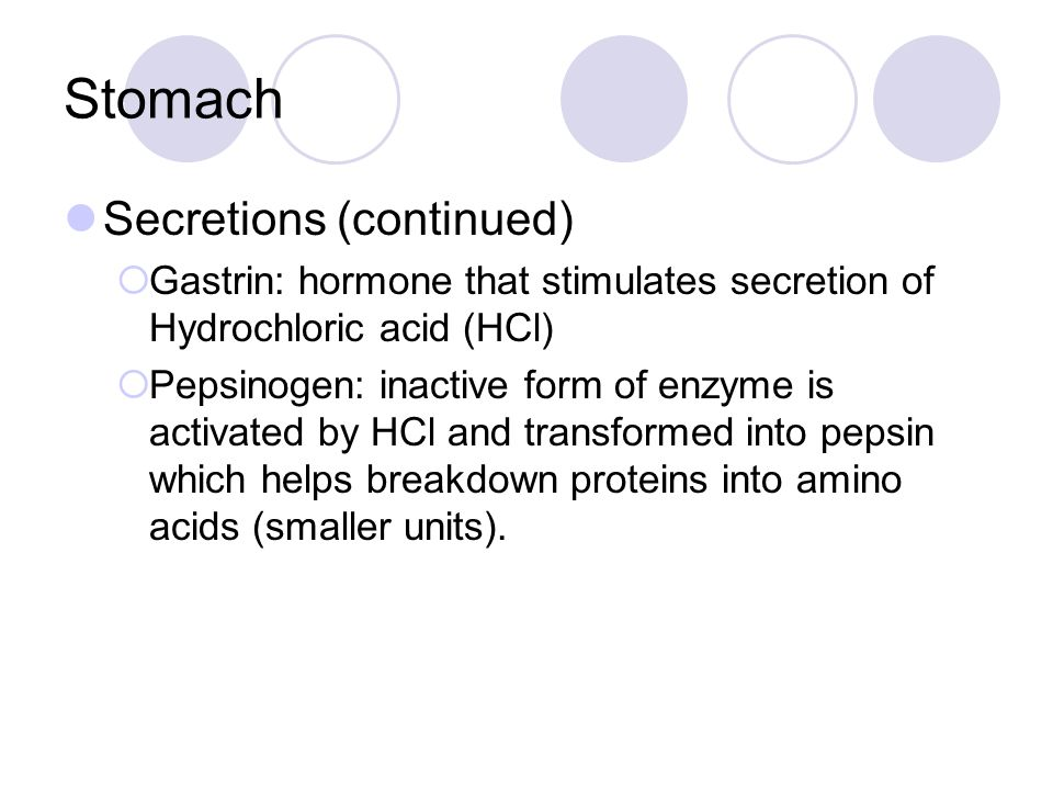Stomach Secretions (continued)  Gastrin: hormone that stimulates secretion of Hydrochloric acid (HCl)  Pepsinogen: inactive form of enzyme is activa