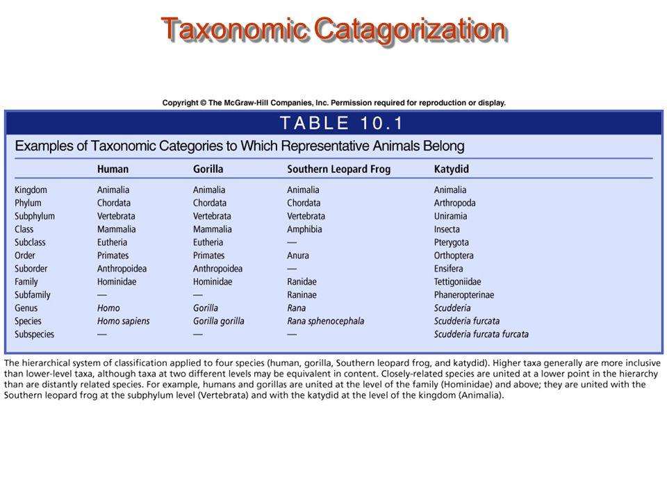 Wittiker's 5 Kingdom Classification Scheme