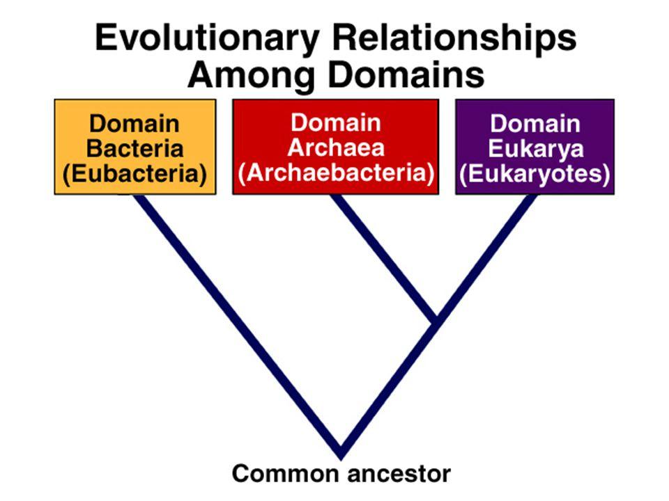 Taxonomic Rules Binomial nomenclature –Genus species –Genus name is a noun –species name is an adjective –Higher taxonomic levels (families, orders, etc..) are also nouns