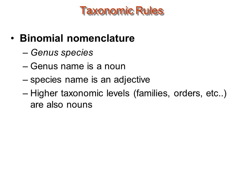 Taxonomic Rules Binomial nomenclature –Genus species –Genus name is a noun –species name is an adjective –Higher taxonomic levels (families, orders, etc..) are also nouns