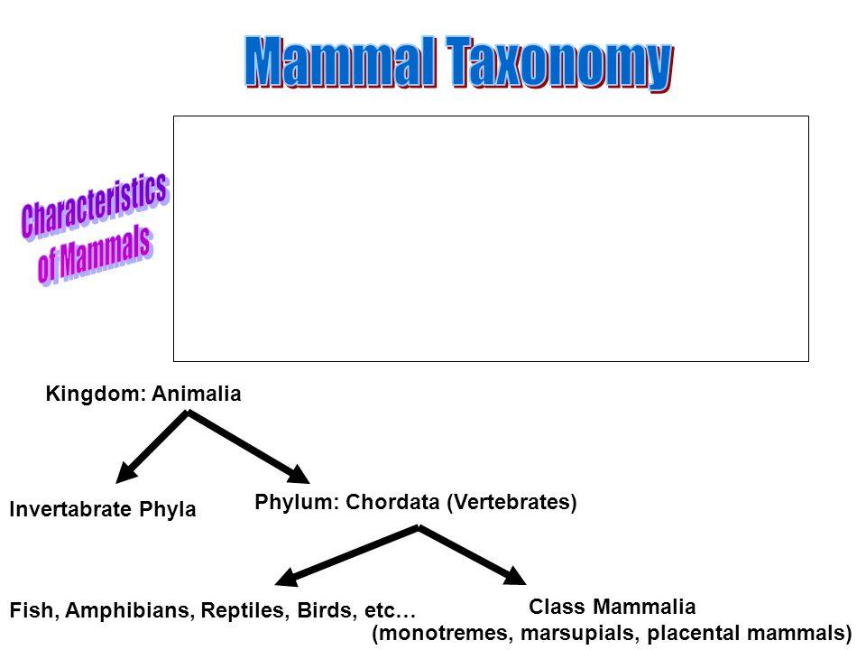 Kingdom: Animalia Phylum: Chordata (Vertebrates) Class Mammalia (monotremes, marsupials, placental mammals) Invertabrate Phyla Fish, Amphibians, Reptiles, Birds, etc…