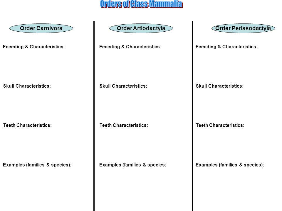 Order PerissodactylaOrder CarnivoraOrder Artiodactyla Feeeding & Characteristics: Skull Characteristics: Teeth Characteristics: Examples (families & s