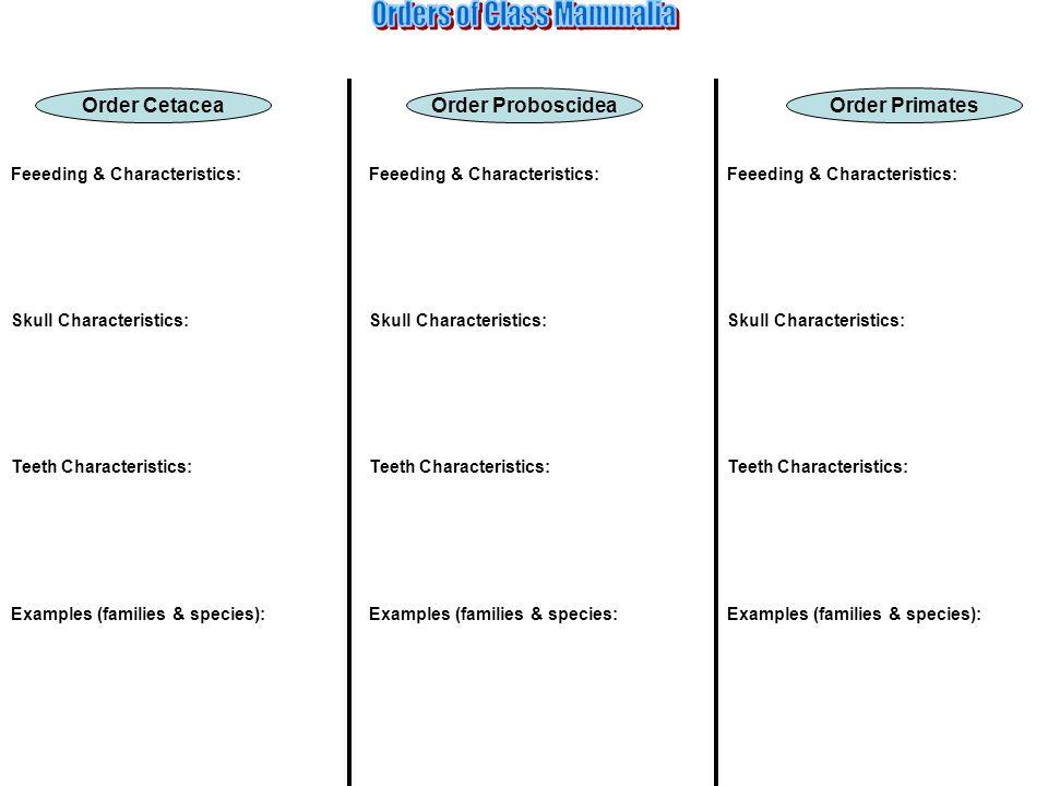 Order PrimatesOrder CetaceaOrder Proboscidea Feeeding & Characteristics: Skull Characteristics: Teeth Characteristics: Examples (families & species):