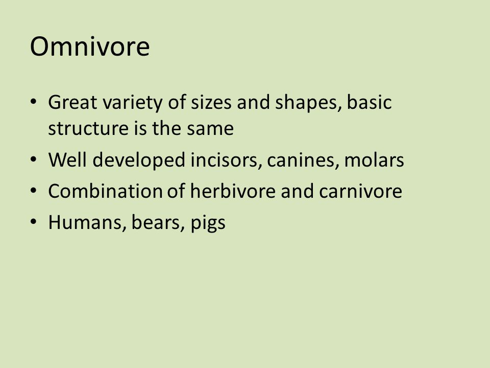 Omnivore Great variety of sizes and shapes, basic structure is the same Well developed incisors, canines, molars Combination of herbivore and carnivor