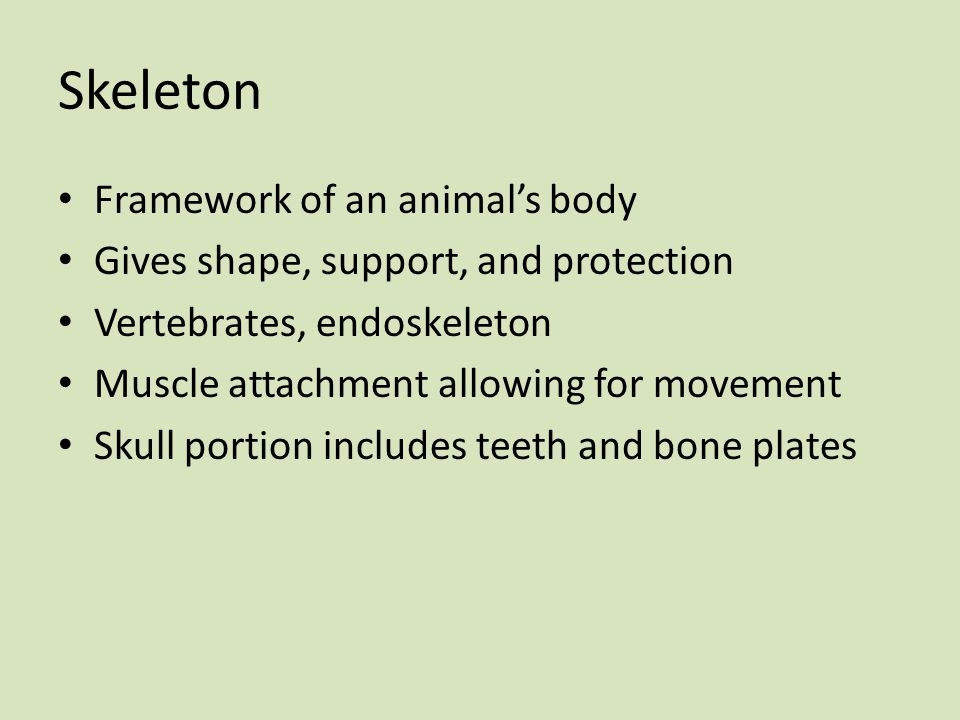 Skeleton Framework of an animal's body Gives shape, support, and protection Vertebrates, endoskeleton Muscle attachment allowing for movement Skull po