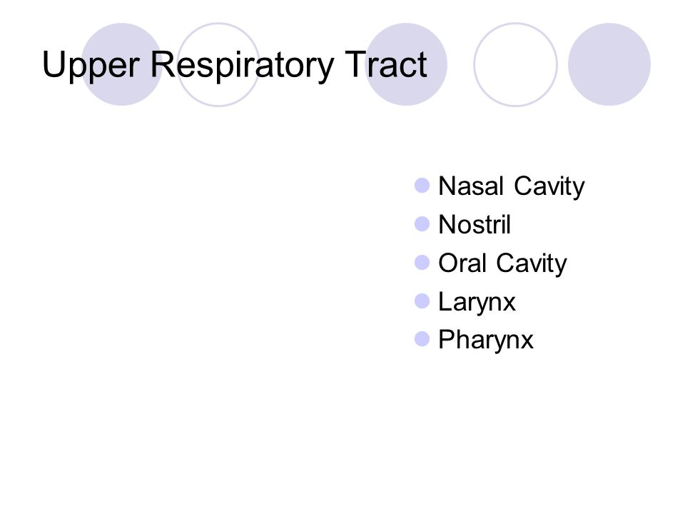 Nose Only portion of the RT that is externally visible Functions:  Provides airway for respiration  Moistens and warms air  Filters inhaled air  Resonating chamber for speech  Houses olfactory receptors 2 divisions:  External nose  Internal nasal cavity