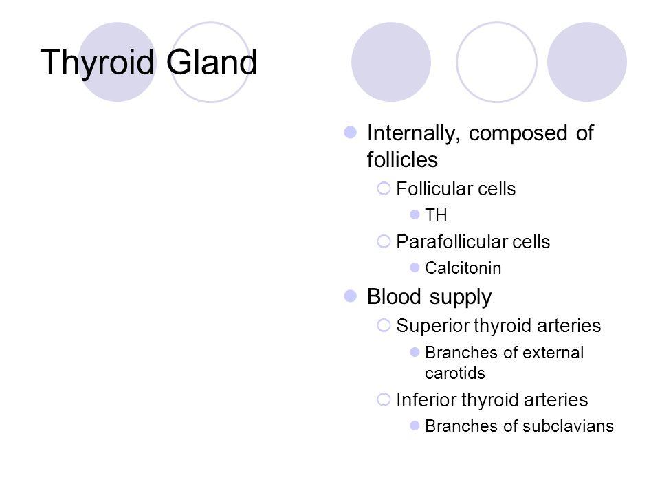 Thyroid Gland Internally, composed of follicles  Follicular cells TH  Parafollicular cells Calcitonin Blood supply  Superior thyroid arteries Branc