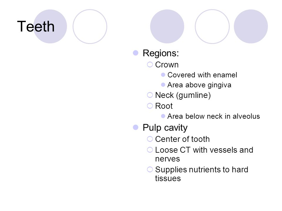 Teeth Regions:  Crown Covered with enamel Area above gingiva  Neck (gumline)  Root Area below neck in alveolus Pulp cavity  Center of tooth  Loos