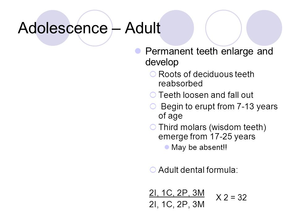 Adolescence – Adult Permanent teeth enlarge and develop  Roots of deciduous teeth reabsorbed  Teeth loosen and fall out  Begin to erupt from 7-13 y