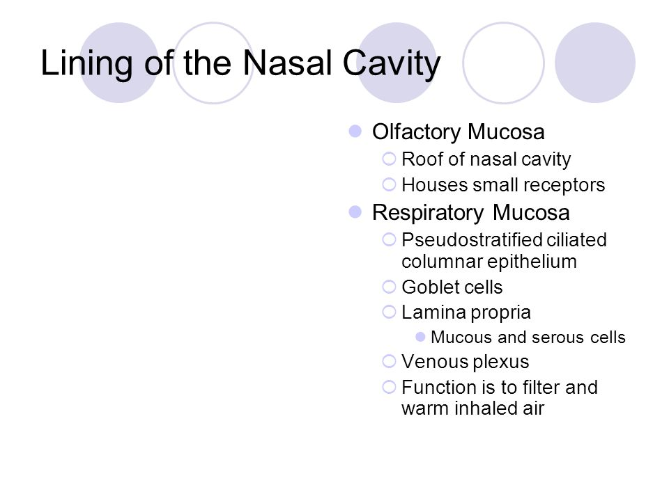 Lining of the Nasal Cavity Olfactory Mucosa  Roof of nasal cavity  Houses small receptors Respiratory Mucosa  Pseudostratified ciliated columnar ep