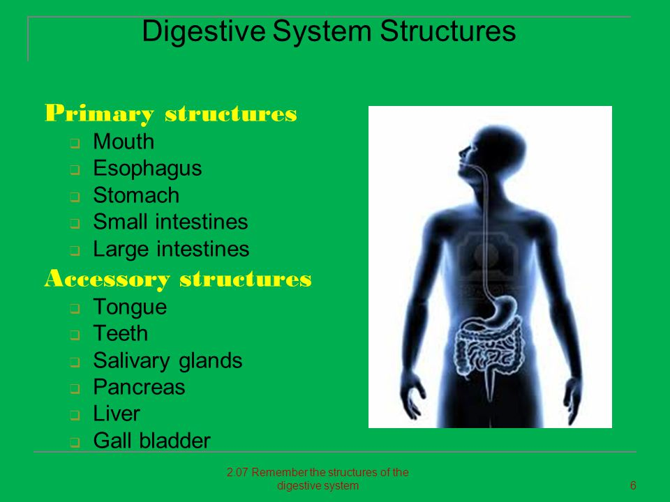 Primary structures  Mouth  Esophagus  Stomach  Small intestines  Large intestines Accessory structures  Tongue  Teeth  Salivary glands  Pancr