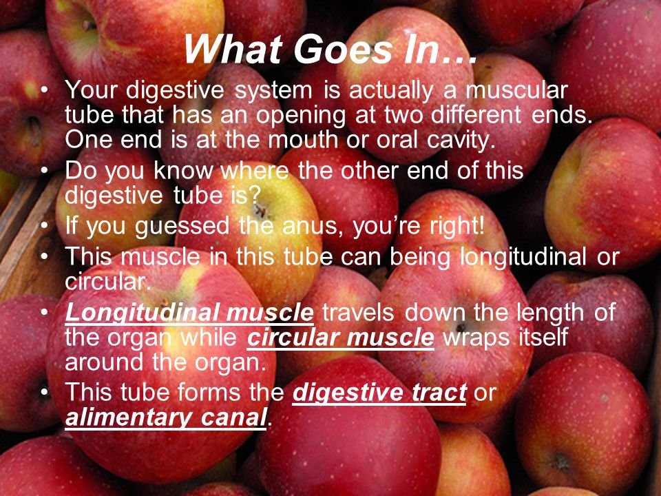 What Goes In… Your digestive system is actually a muscular tube that has an opening at two different ends. One end is at the mouth or oral cavity. Do