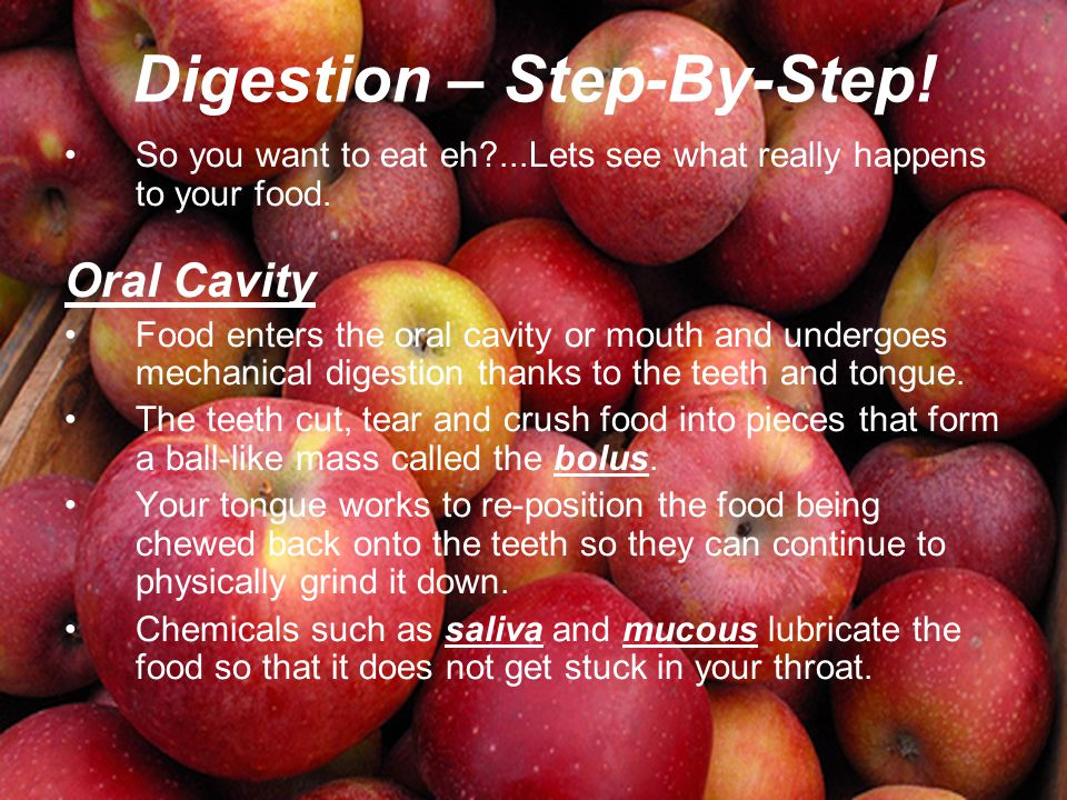 Digestion – Step-By-Step! So you want to eat eh?...Lets see what really happens to your food. Oral Cavity Food enters the oral cavity or mouth and und