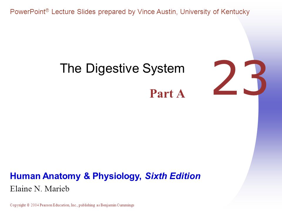 Copyright © 2004 Pearson Education, Inc., publishing as Benjamin Cummings Digestive System: Overview  The alimentary canal or gastrointestinal (GI) tract digests and absorbs food  Alimentary canal – mouth, pharynx, esophagus, stomach, small intestine, and large intestine  Accessory digestive organs – teeth, tongue, gallbladder, salivary glands, liver, and pancreas