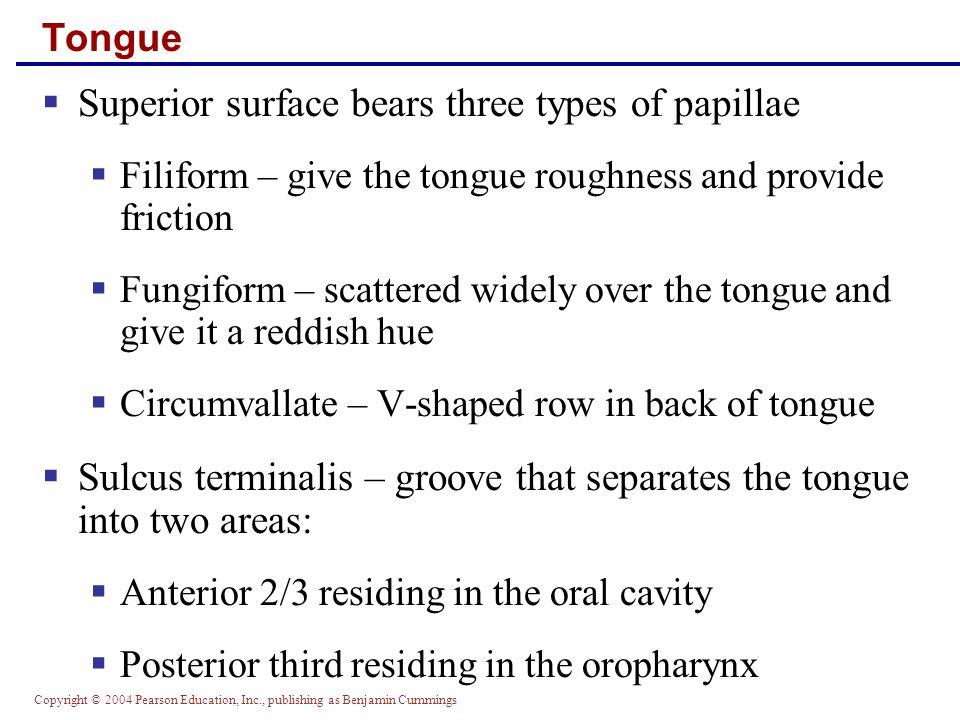 Copyright © 2004 Pearson Education, Inc., publishing as Benjamin Cummings Tongue Figure 23.8