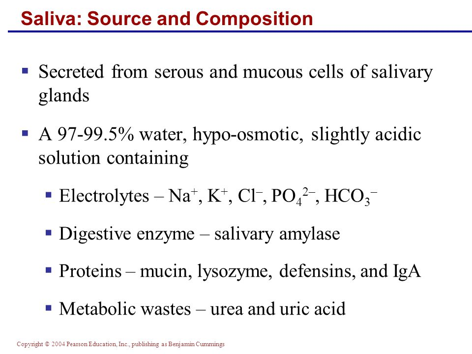 Copyright © 2004 Pearson Education, Inc., publishing as Benjamin Cummings Control of Salivation  Intrinsic glands keep the mouth moist  Extrinsic salivary glands secrete serous, enzyme- rich saliva in response to:  Ingested food which stimulates chemoreceptors and pressoreceptors  The thought of food  Strong sympathetic stimulation inhibits salivation and results in dry mouth