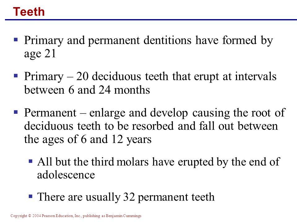 Copyright © 2004 Pearson Education, Inc., publishing as Benjamin Cummings Deciduous Teeth Figure 23.10.1