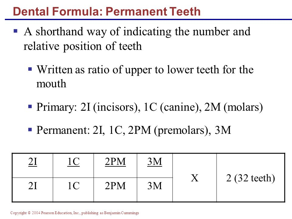 Copyright © 2004 Pearson Education, Inc., publishing as Benjamin Cummings Tooth Structure  Two main regions – crown and the root  Crown – exposed part of the tooth above the gingiva (gum)  Enamel – acellular, brittle material composed of calcium salts and hydroxyapatite crystals is the hardest substance in the body  Encapsules the crown of the tooth  Root – portion of the tooth embedded in the jawbone