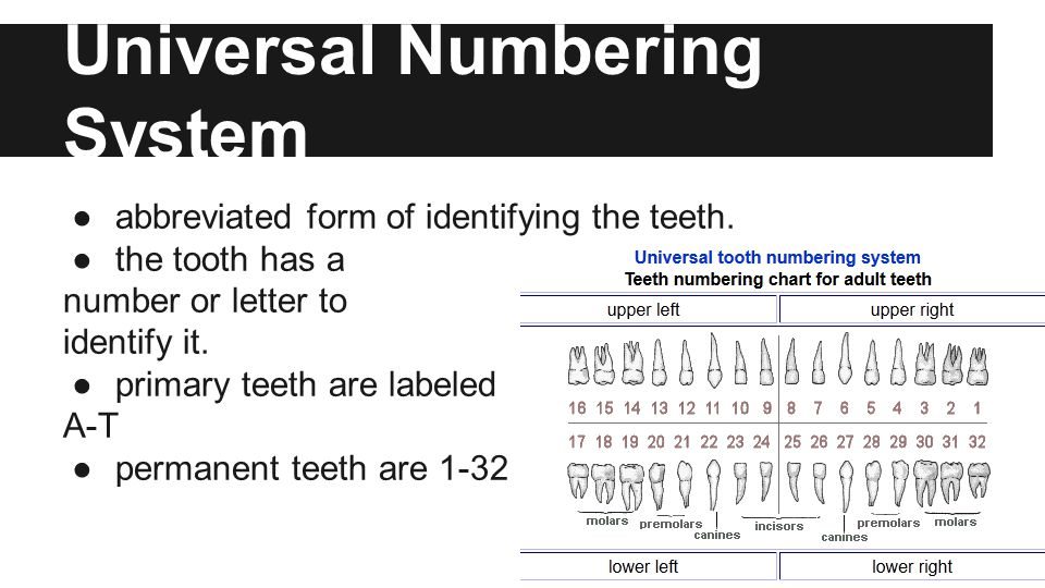Universal Numbering System ●abbreviated form of identifying the teeth.