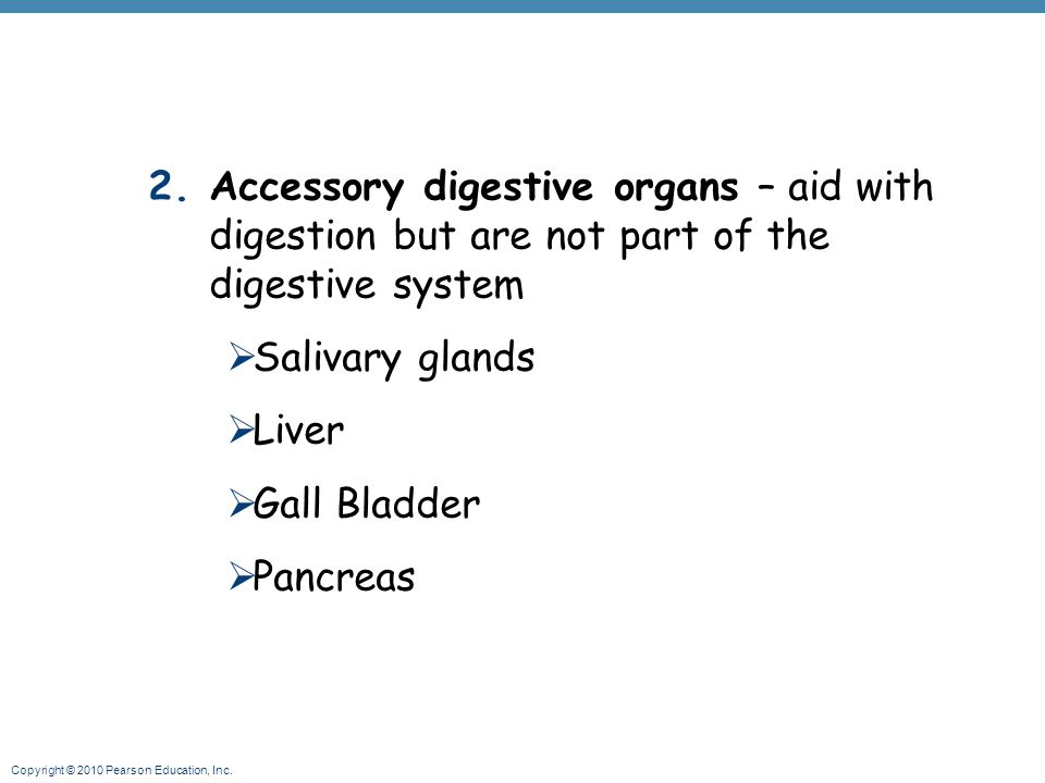 Copyright © 2010 Pearson Education, Inc. 2.Accessory digestive organs – aid with digestion but are not part of the digestive system  Salivary glands