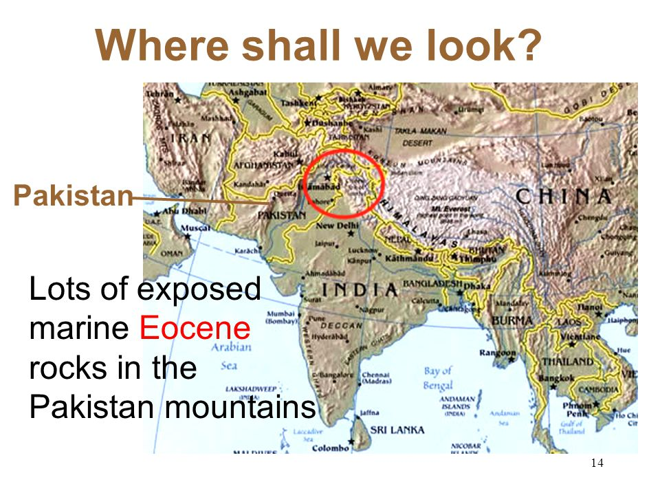 13 OK! So, where shall we look for Eocene Fossils? The Tethys Sea India Moved North… …Squished into Asia… Mountains of Pakistan 55 38