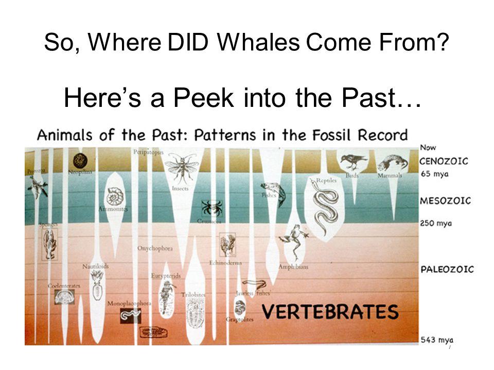 37 Whale Ankles.Mesonychid Prim.Perissodactyl Prim.